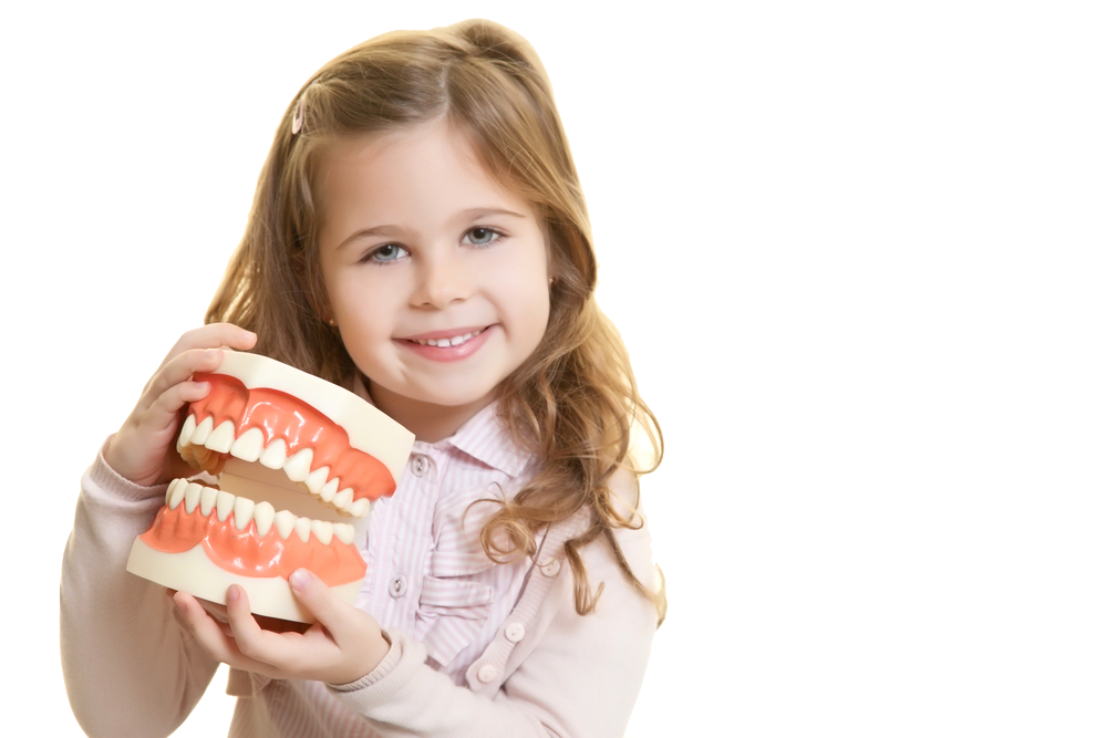 child smiling holding model teeth